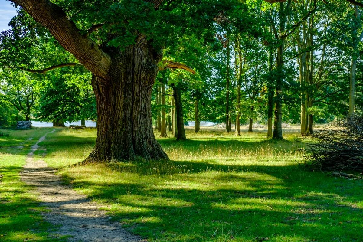 Petworth Park,Petworth,West Sussex,England,Uk,Europe