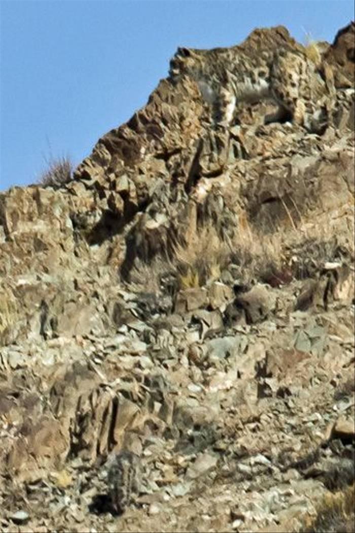 Snow Leopard and cub, Ladakh (Russell Scott)