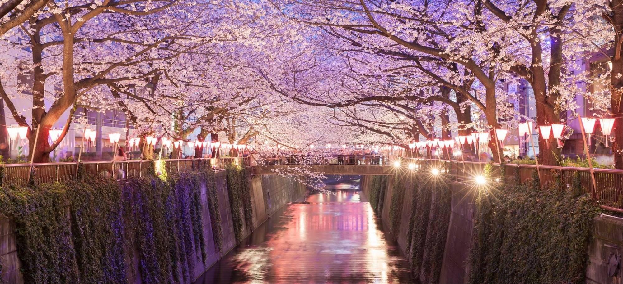 3 Day   Tokyo, Nakameguro Cherry Blossom Illuminations  Itinerary Desktop 3