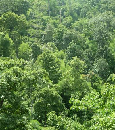 Teak forest in Chin state