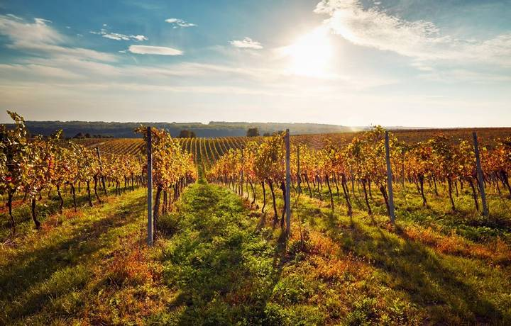Colorful autumn vineyards in southern Moravia