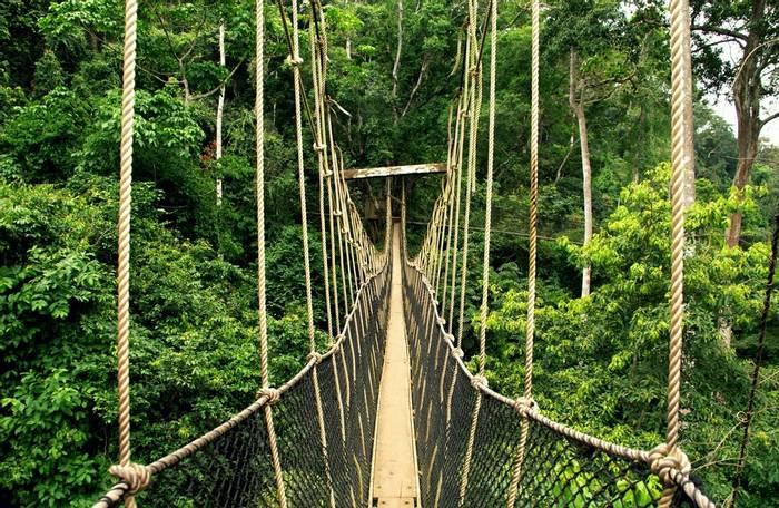 Canopy Walkway, Ghana shutterstock_1502975363.jpg