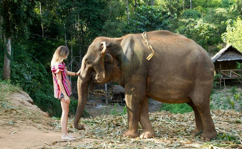 Thailand - elephant-jungle-sanctuary-8 - From Agent.jpg