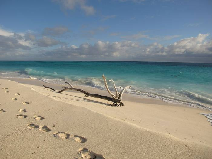 Seychelles beach (Andrew Lapworth).jpg