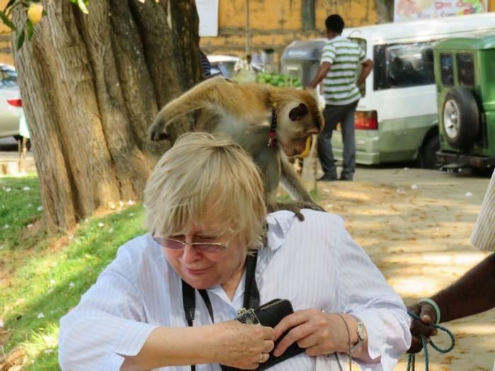 Friendly Monkey (David Hartill)