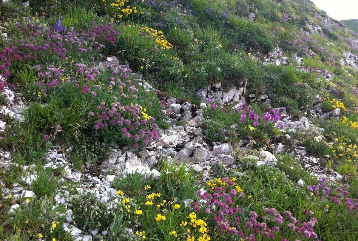 Natural rock garden (Philip Thompson)