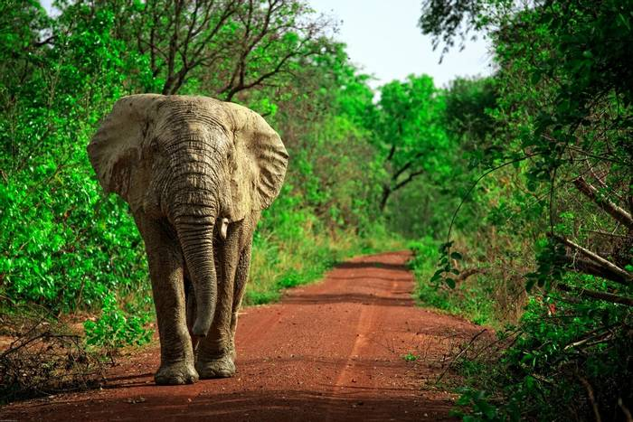Mole National Park, Ghana shutterstock_189245948.jpg
