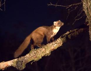 Birds & Mammals of the Cairngorms (Wildlife Photography)
