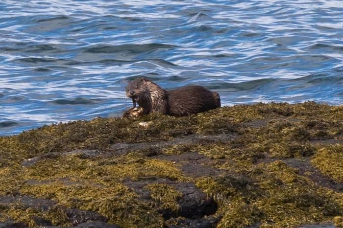 Otter (Chris Hutchinson).jpg