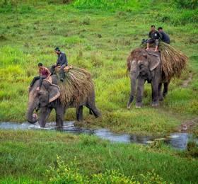 Royal Chitwan National Park 4x4 safari