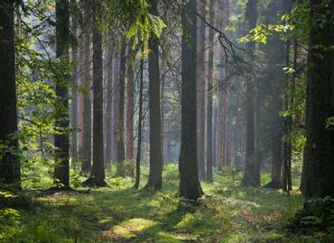 Poland's Primeval Forests