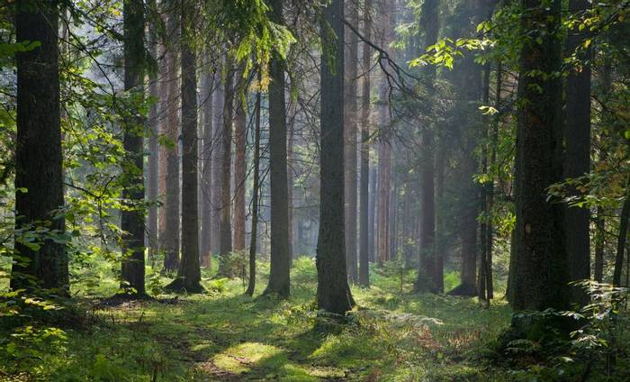 Bialowieza Forest, Poland.