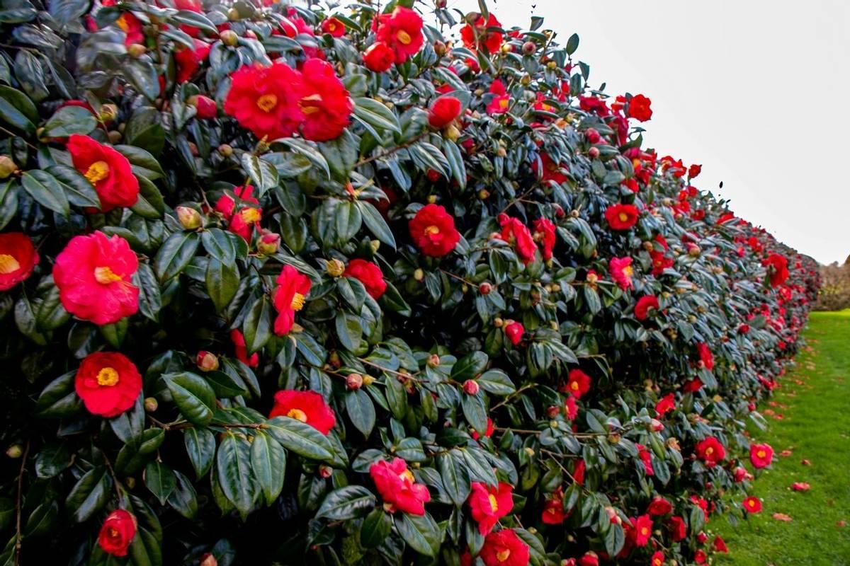 Exmoor Somerset & Devon Garden Tours -  Castle Hill -  IMG_5548_edited-2.jpg