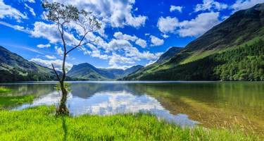 Lone tree at Buttermere, the English Lake District in Cumbria