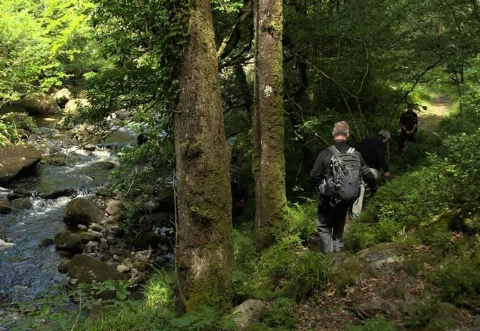 Dartmoor trail (Paul Winser).jpg