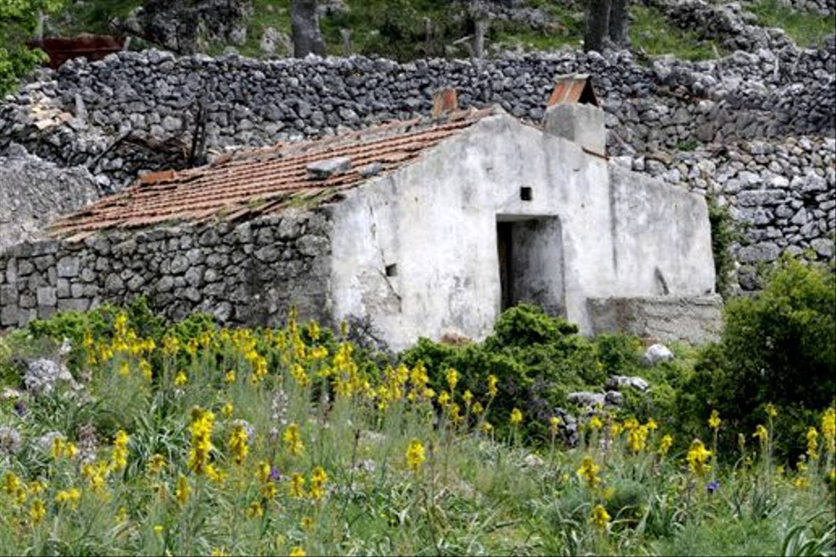 Farm house and Yellow Asphodel (Andrew Cleave)