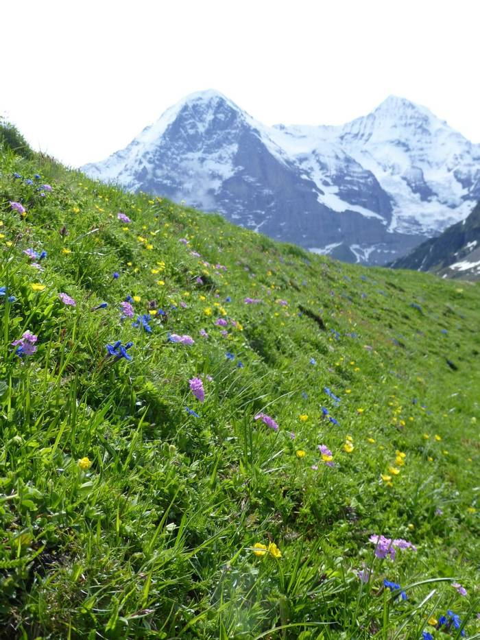 Eiger (Kerrie Porteous)