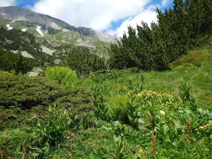Sub-alpine Meadow (Andrew Cleave)