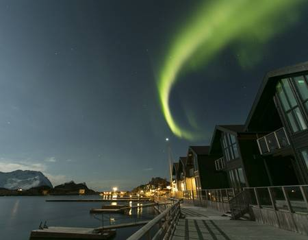 wildlife northern lights in senja