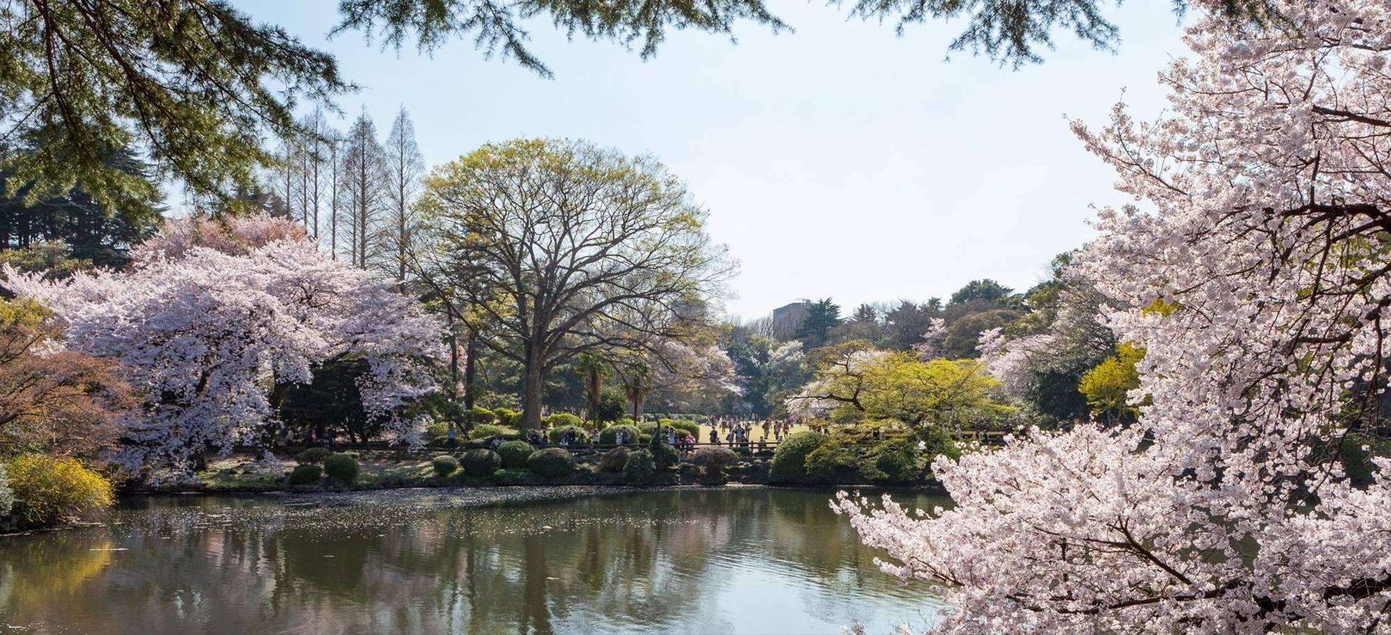 1 Day   Tokyo,  Shinjuku Gyoen National Garden   Itinerary Desktop
