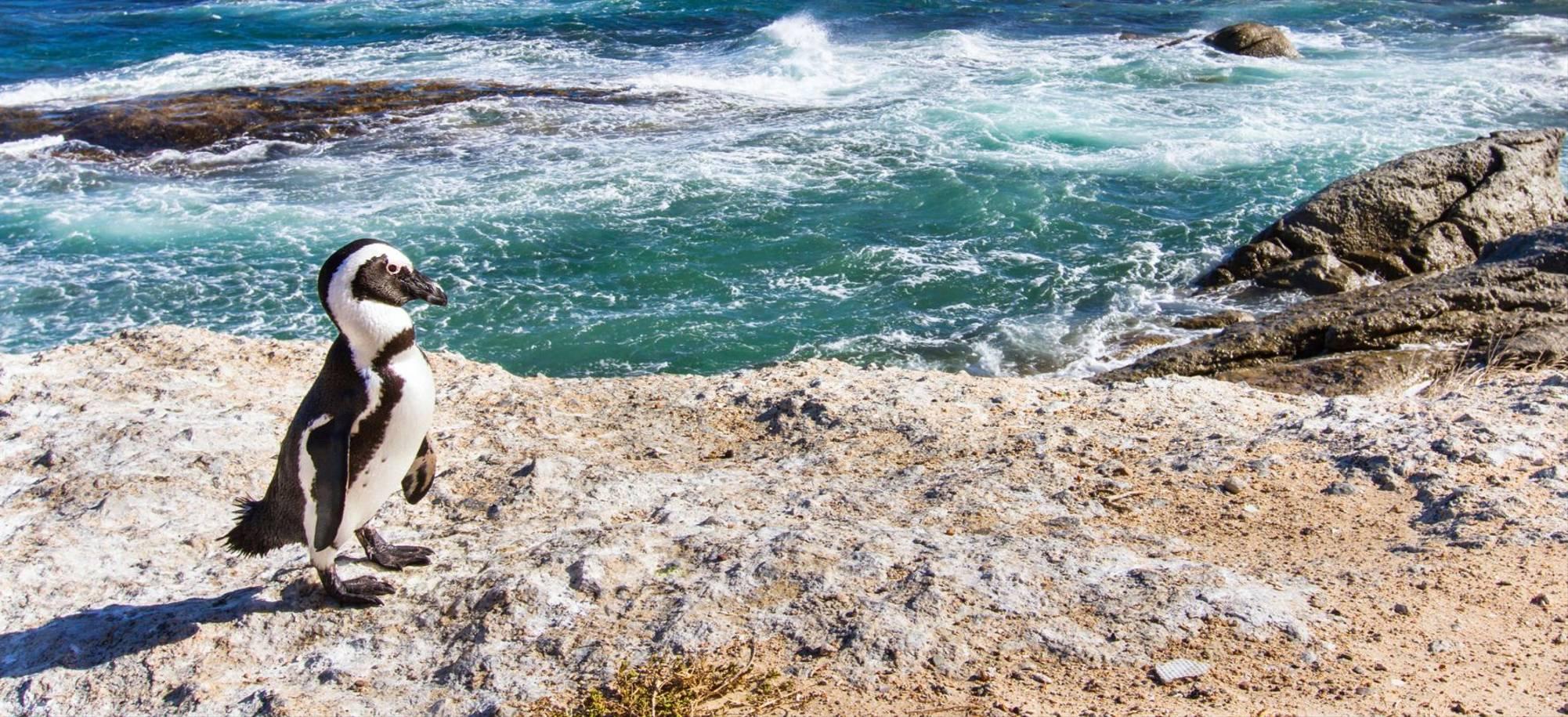Cape Town   Boulders Beach    Itinerary Desktop