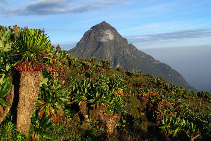 Mikeno Volcano, from Volcanoes National Park, Rwanda shutterstock_103477010.jpg