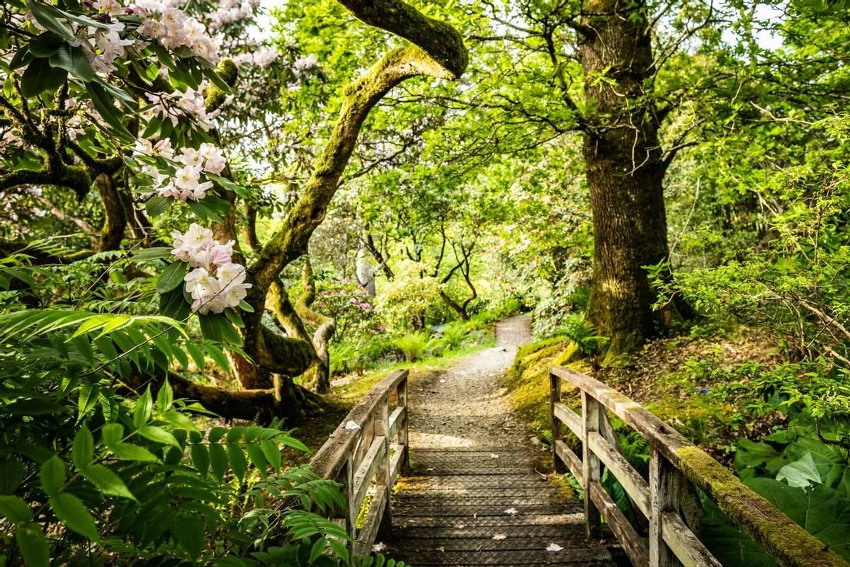 Scotland - Scottish Highlands Gardens Tour - Kelly Robson - Ardkinglas Estate - 3X6A0776.jpg