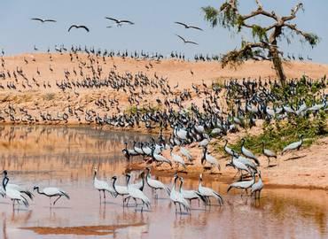 Rajasthan - Wildlife & History