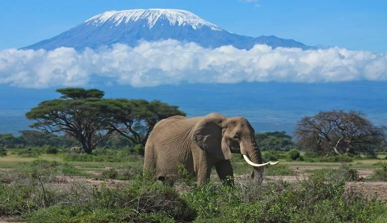 Shutterstock 60854839 Mount Kilimanjaro