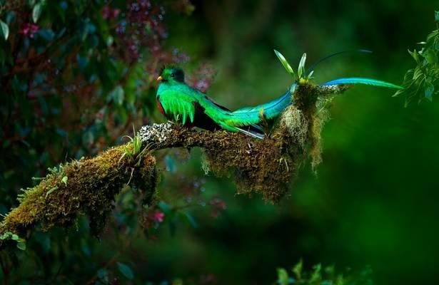 Resplendent Quetzal, Costa Rica Shutterstock 650680573