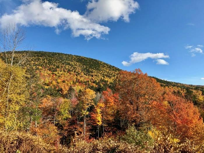 Varied hill foliage (Adam Dudley).jpg