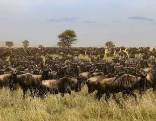 Tanzania's Great Migration