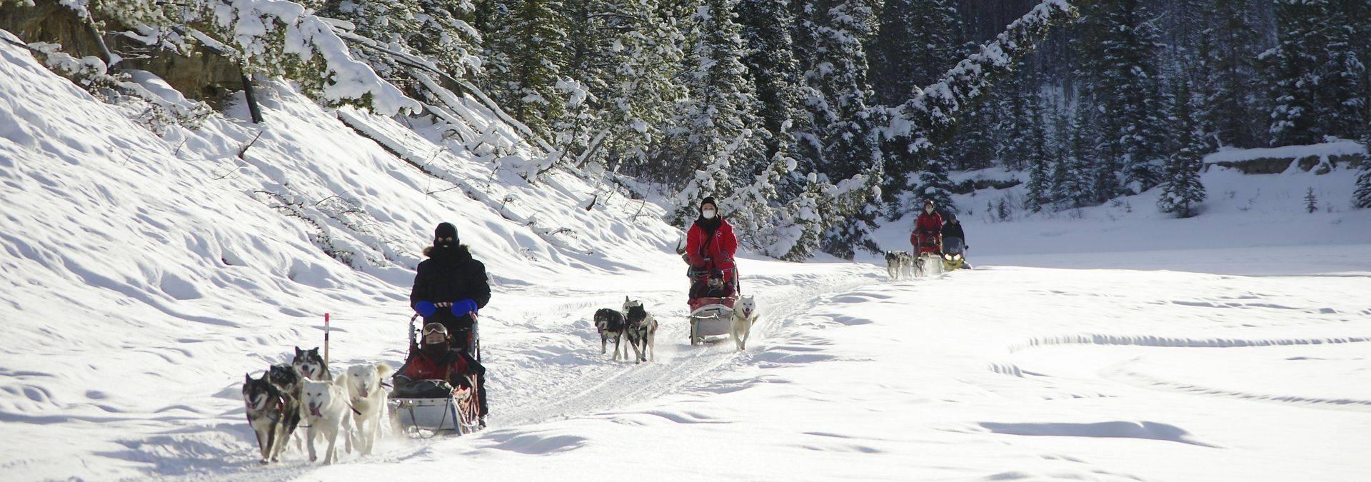 Dog Sledding 4 Credit Arctic Range Adventure Ltd