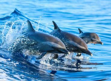 Mantas, Dolphins & Coral Reefs - A Maldives Cruise