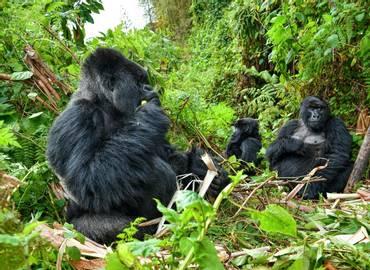 Tailormade Rwanda