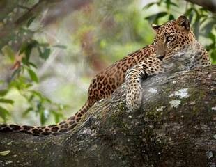 Sri Lanka - Blue Whales & Leopards