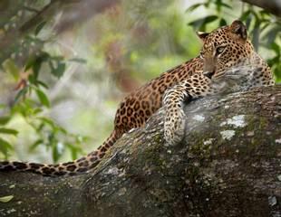 Sri Lanka - Blue Whales & Leopards