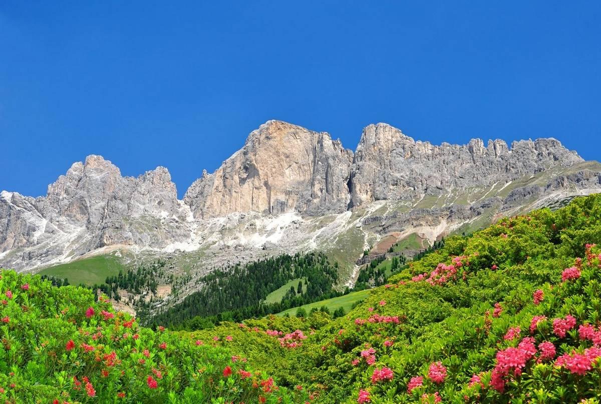 Rosengarten, Dolomites, Italy Shutterstock 234462799