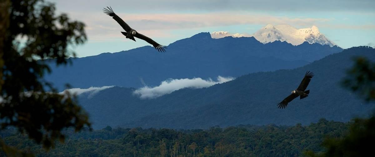 Condors, Antisana, Ecuador Shutterstock 569240677