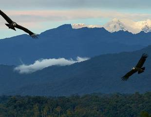 Ecuador - The Andes & Amazon