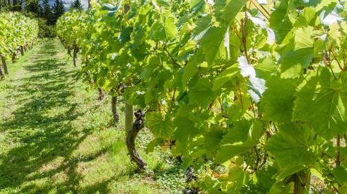 4-Night South Downs Vineyard & Wine Tasting Walks Holiday