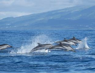Dolphins & Whales of Madeira