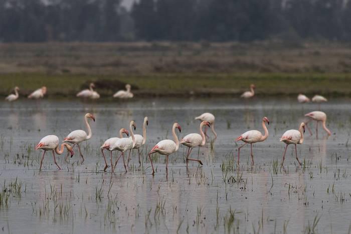 Flamingos (Javi Elorriaga)