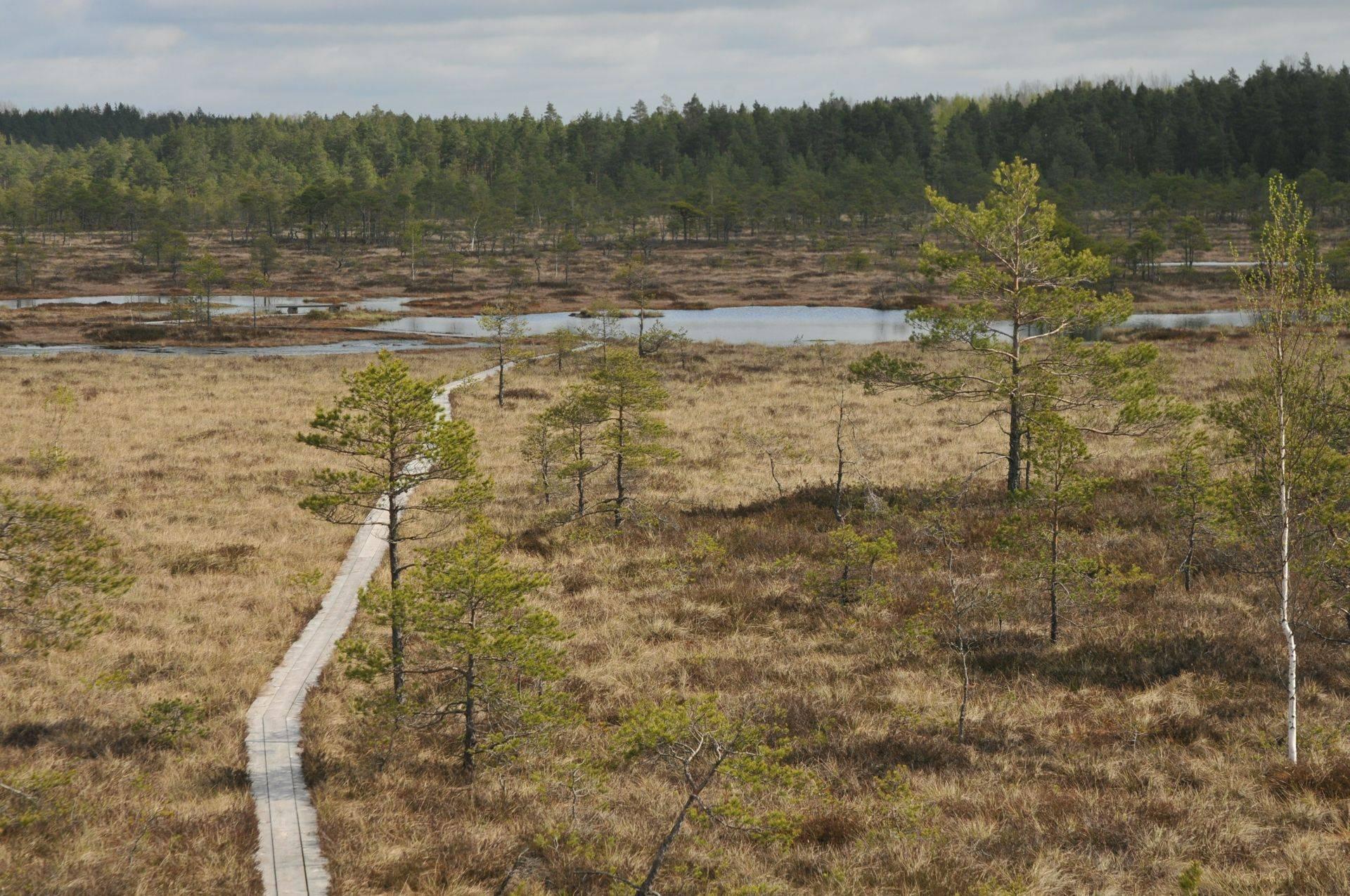 Estonia in Autumn - Naturetrek