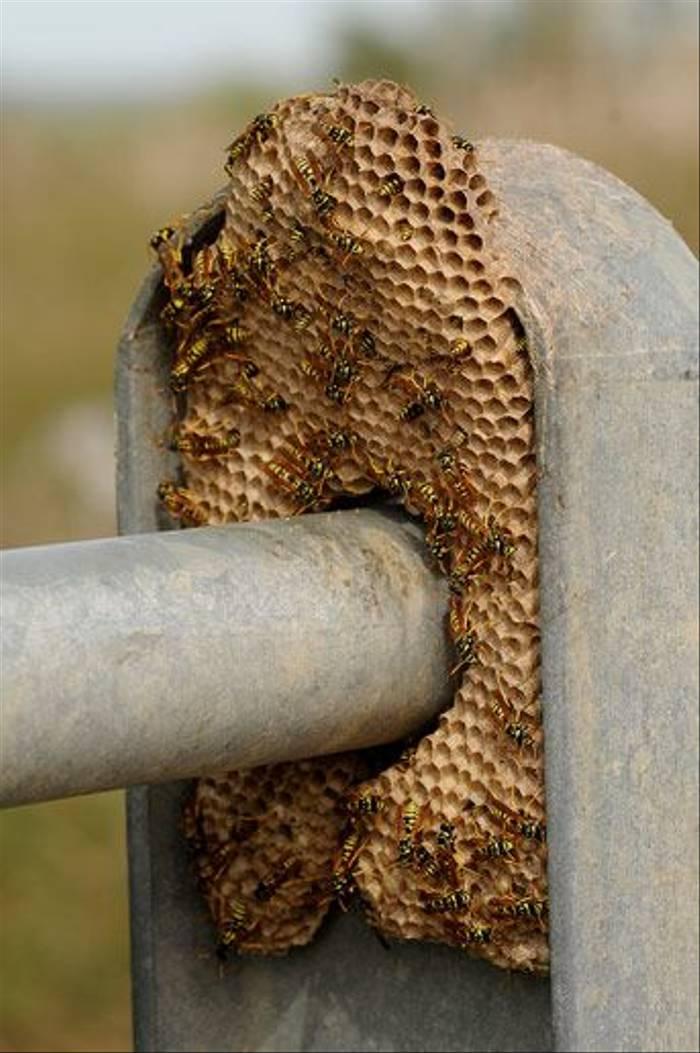 Wasp Nest (David Morris)