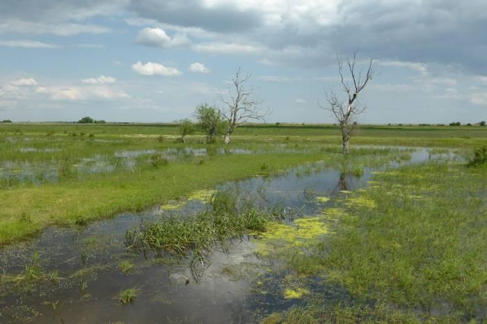 Hortobagy Fish ponds (R. Davidson)