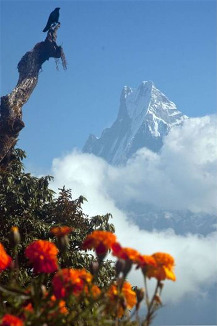 Machapuchare or Fish Tail mountain (Andy Pringle)
