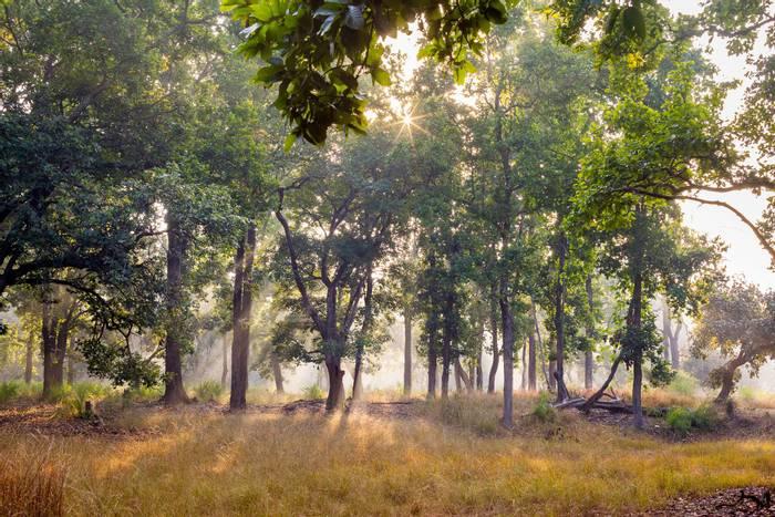 Bandhavgarh National Park, India shutterstock_246807796.jpg