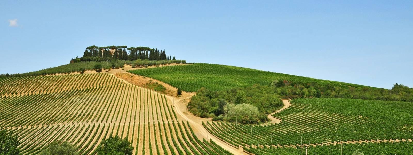 Chianti - Toscana -  AdobeStock_43839304.jpeg