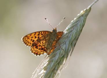 Poland's Butterflies & Dragonflies